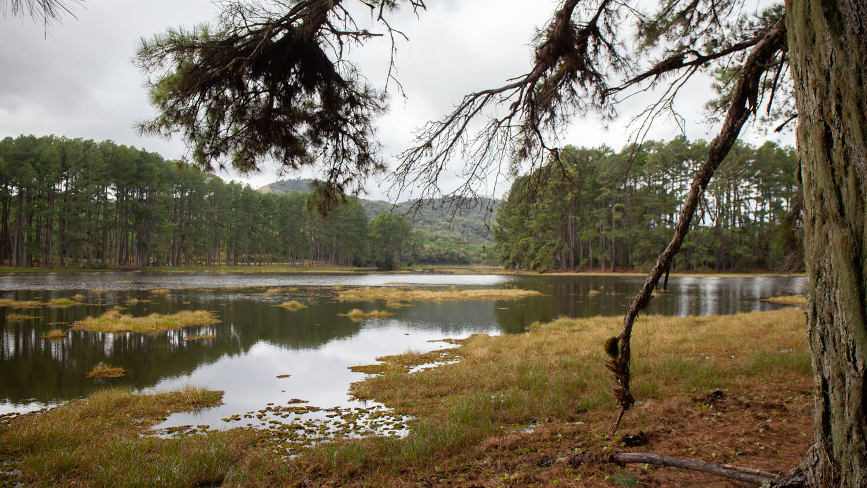 floresta-perimbo-2