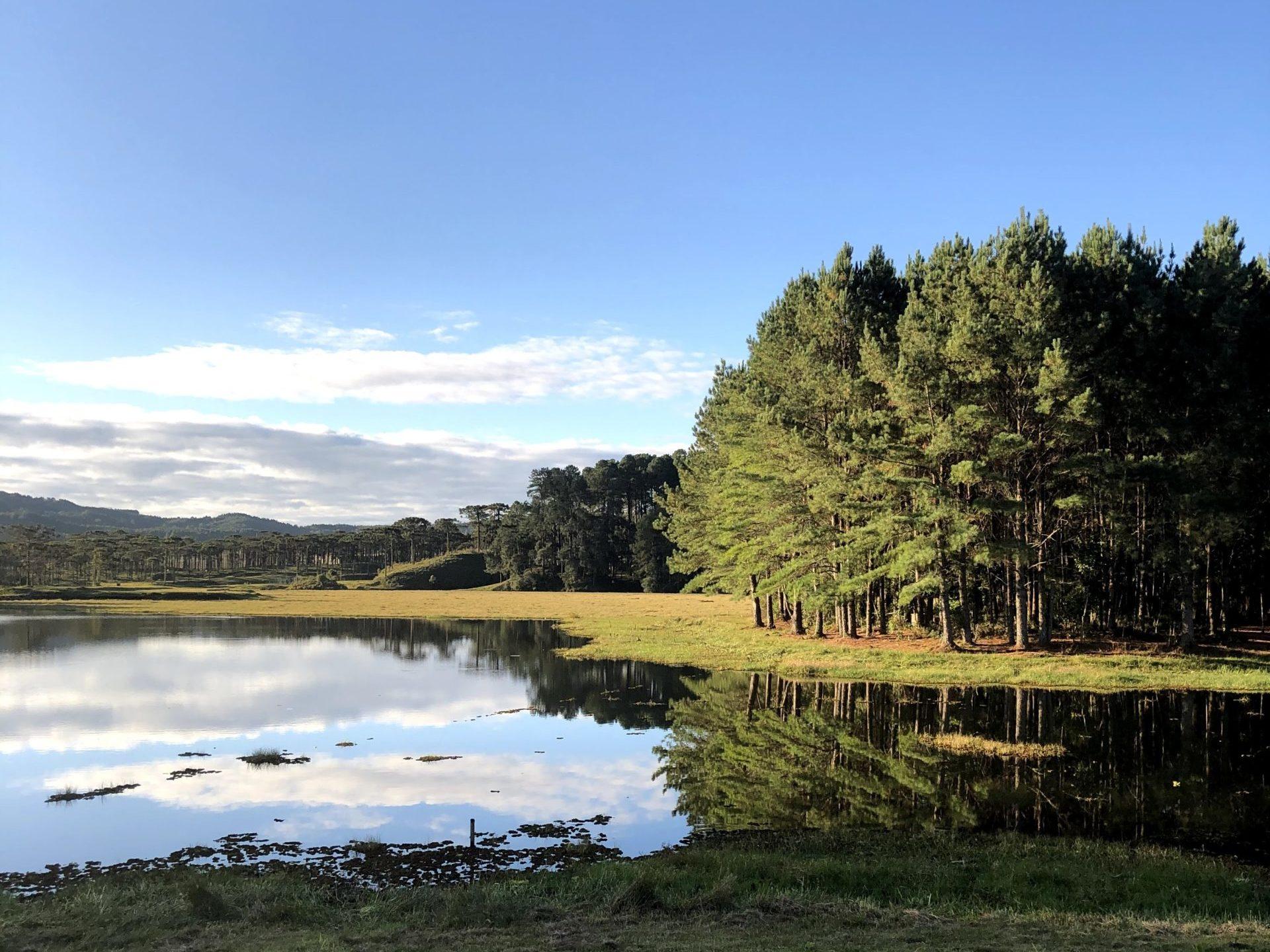 floresta-perimbo.jpg