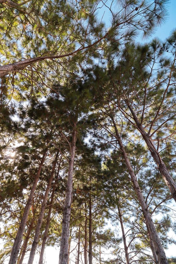 camping-recando-do-santinho (3) (1)