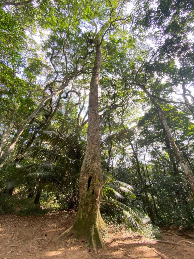 trilha-pedra-da-gavea-carrasqueira (5)
