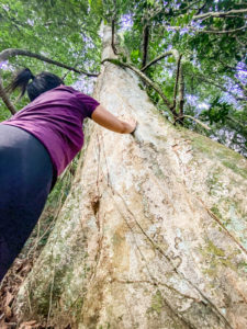 trilha-pedra-da-gavea-carrasqueira (6)
