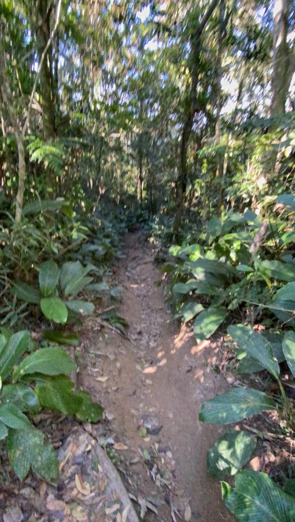trilha-pico-da-pedra-camboriu (3)_1